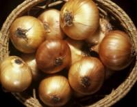 Daržovių galia: mokslininkai sukūrė dirbtinius raumenis iš svogūno lukšto