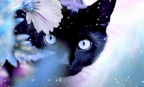 Įžymusis britų katinas-kleptomanas vėl žengė į nusikaltimų kelią