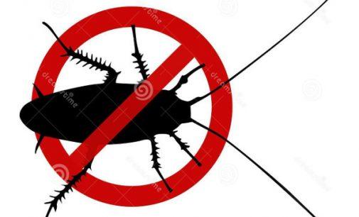 Kur pradingo tarakonai: kodėl jie išnyko ir kur išėjo?