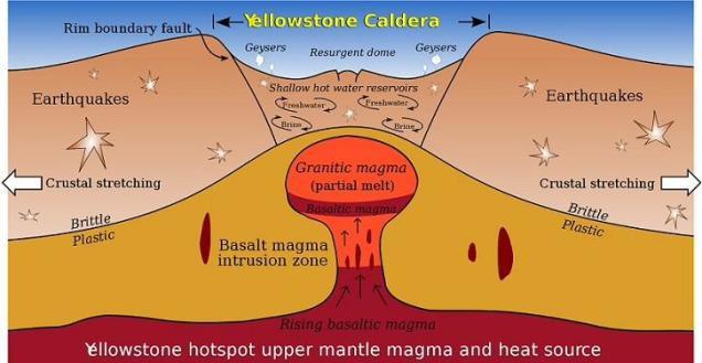 kalderos anatomija 2