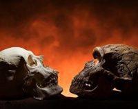 Žmonės ir neandertaliečiai turėjo lytinių kontaktų – ar tai buvo meilė? [2]