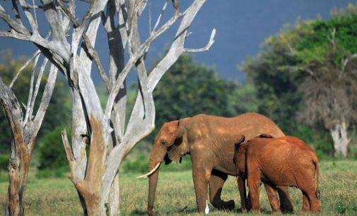 Daugiau kaip pusė stuburinių gyvūnų išnyko per pastaruosius  keturiasdešimt metų
