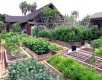 3 tonos daržovių išaugintos 4 arų sklype maitina šeimą ir aprūpina visus miestelio restoranus