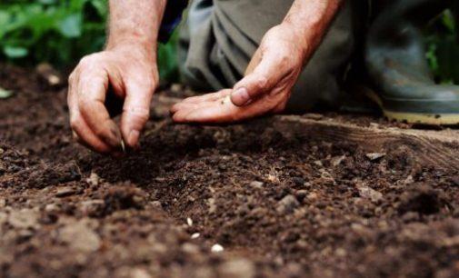 Kita augalų sėklų istorija