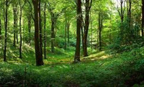 Seimas ypatingos skubos tvarka apsispręs dėl Lietuvos miškų urėdijų reformos