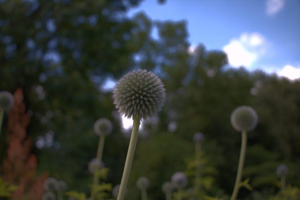 Natūralios Lietuvos gėlės, fotografijos momentai