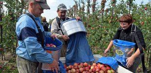 """Vergiškas darbas. Europa įveda """"mokestį už ukrainiečius"""""""