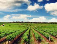 Seimas naikina žemės ūkio paskirties žemės įsigijimo saugiklius