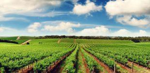 Žemės pardavimas, o gal grobimas?