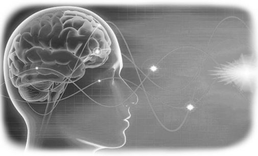 Amerikiečių startuolis siūlo išsaugoti smegenis gyvybės kaina