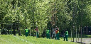 Vilnius sodina daugiau kaip 5 tūkst. naujų medžių