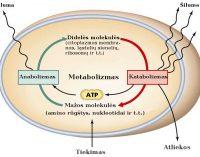 Metabolizmas