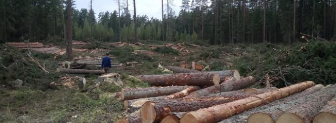 Seimo aplinkos apsaugos komitetas svarstė klausimą kaip gauti kuo daugiau naudos iš kertamų miškų