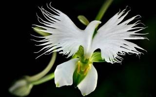 Gėlės panašios ne tik į gėles, o ir į dar kažką
