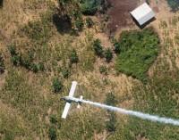 Kolumbija: drugeliai kaip nauja kovos prieš kokainą rūšis?
