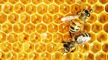 bitutės - paveikslėlis