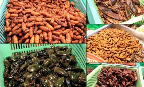 Mūsų netolima ateitis – maistui vabalai ir tarakonai, maisto priedai iš vabzdžių