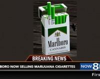 Philip Morris organizavo legalų cigarečių su marihuana pardavimą JAV