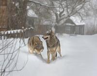 Tai ką mokslininkai aptiko Černobylio miške, juos gerokai nustebino