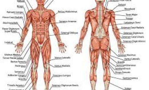 Kaip apgauti savo kūną?