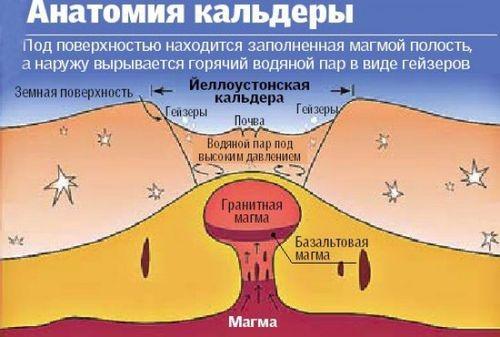 kalderos anatomija 1