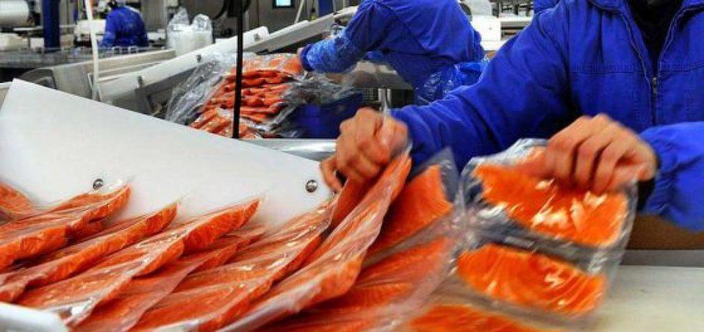 Masinio apnuodijimo žuvis: šokiruojantys faktai apie Norvegijos lašišas