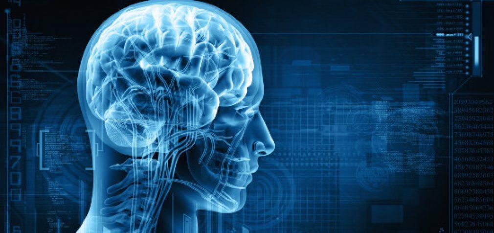 Nepasiduoti mirčiai: pradėtas mirusių smegenų regeneracijos projektas
