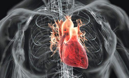 Mokslininkai: treniruotės ištvermei lavinti nekenkia širdies darbui