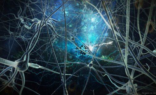 Neurobiologas pasakoja apie tai, kas negerai su mūsų smegenimis