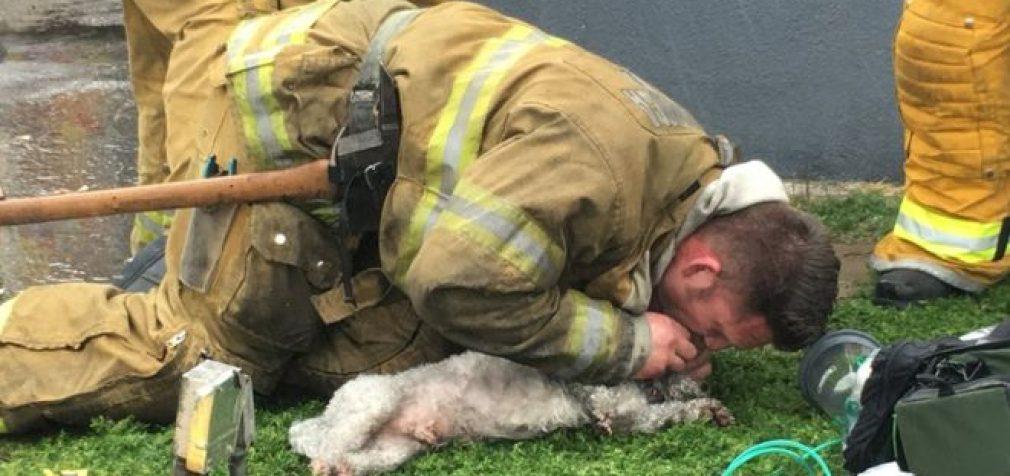 Gaisrininkas išgelbėjo šunį darydamas jam dirbtinį kvėpavimą burna į burną