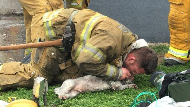 Šuo nekvėpavo, kai buvo išneštas iš degančio buto