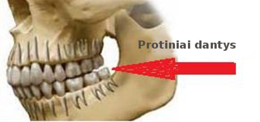 Protiniai dantys – kaip, kodėl, kam ir kada jie atsiranda