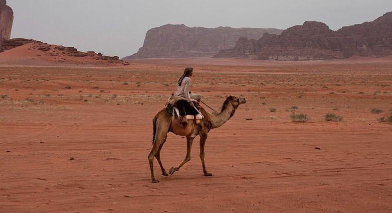 raitelis arabas
