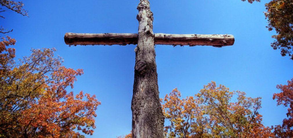 Šalyje susidarė situacija, kai mūsų miškuose pūva nukirsta mediena, o biokurui ji importuojama iš kaimyninės Baltarusijos