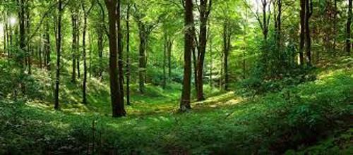 Miškai miškų reforma