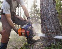 Miškų reforma, VMI ir darbdaviai prieš eilinį žmogų