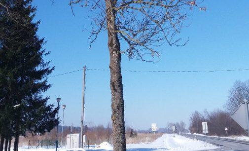 Sakoma – nevyk Dievo į medį, o senukus galima? (Atnaujinta)