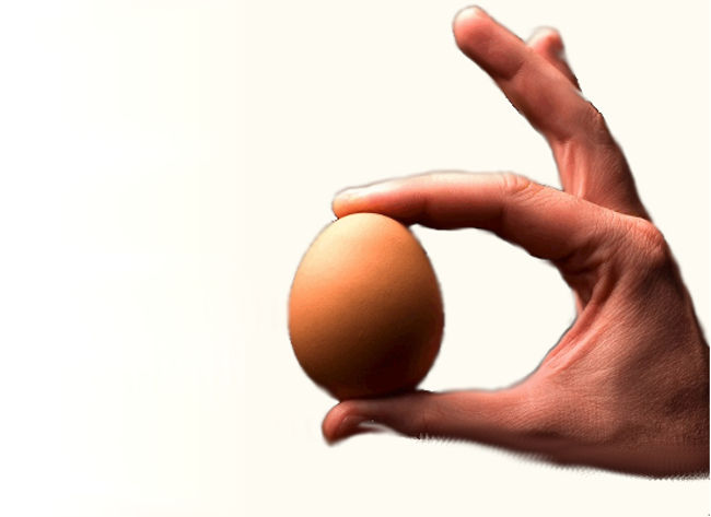 Kiaušinių kaina