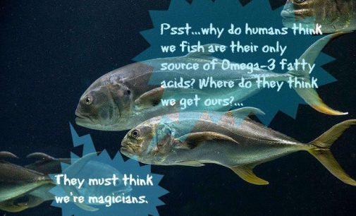 Žuvis, omega-3 riebalų rūgščių šaltinis, – ar tikrai?