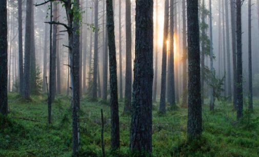 Ar tik neteks mokėti užapsilankymus miške?