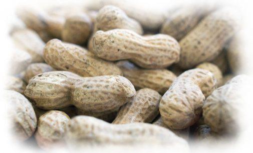 Skiepai ir alergija žemės riešutams