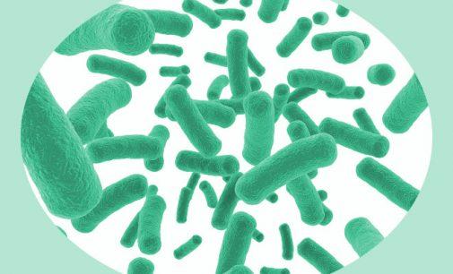 Mokslas: probiotikai neduoda praktiškai jokios naudos