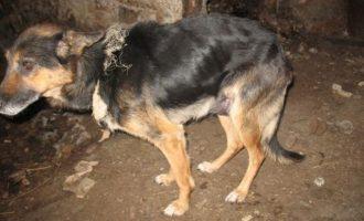 Teismo sprendimu netinkamai prižiūrėtas šuo konfiskuotas