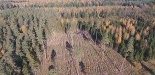 Antikonstitucinė Miškų ūkio reforma turi būti stabdoma – atkuriant didžiausią Lietuvos turtą – miškus, tvirtina socialdemokratai