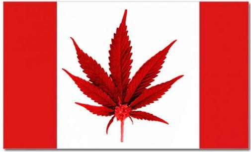 Kanada pilnai legalizavo marichuaną
