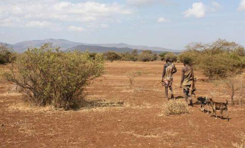 Afrikos genties Hadza gyvenimo ypatybė – kaip išlikti puikios formos
