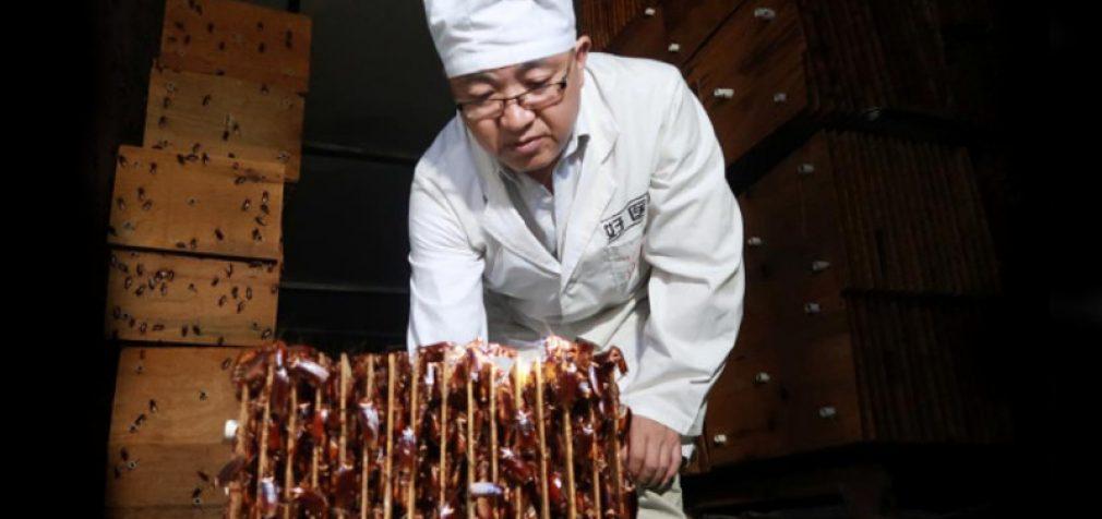 Kinija kuria valgomų tarakonų armiją, kuri suės viską