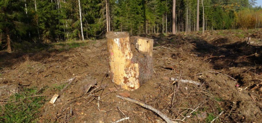Konservatorės ragina stabdyti šimtamečių medžių kirtimus greta Vilniaus