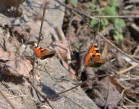 Vabzdžiai žūva visame pasaulyje – mokslininkai įspėja apie katastrofą