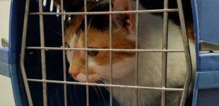 Keliaujant su gyvūnais augintiniais ar siunčiant juos į užsienį, reikia laikytis reikalavimų
